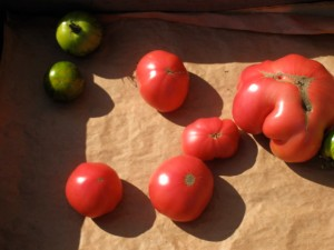 ripe tomatoes for lunch