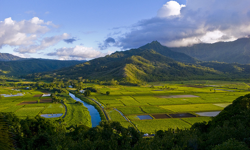 A view of taro fields in K'auai